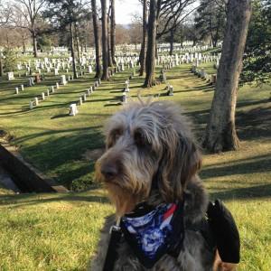 Gander_cemetery